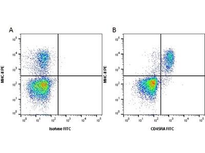 MOUSE ANTI RAT CD45RA (B CELLS ONLY)