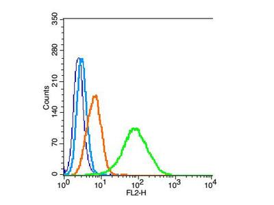 PALB2 Polyclonal Antibody