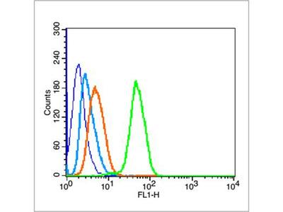 P53(wt-p53) Antibody