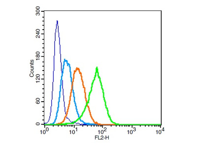CD13/APN/ANPEN Antibody