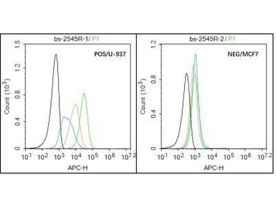 IL-2R gamma Antibody