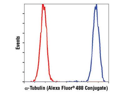 α-Tubulin (DM1A) Mouse mAb (Alexa Fluor ® 488 Conjugate)