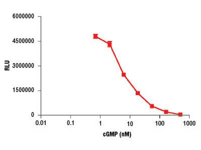 Cyclic GMP XP ® Chemiluminescent Assay Kit