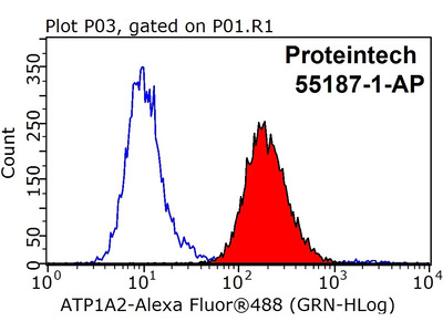ATP1A1-Specific antibody