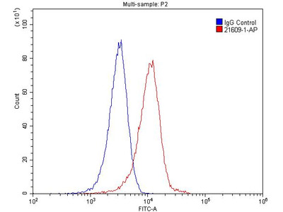 IL1RAPL1 antibody - KD/KO Validated
