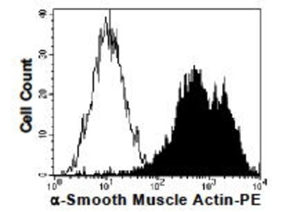 Actin, alpha, Smooth Muscle (PE)