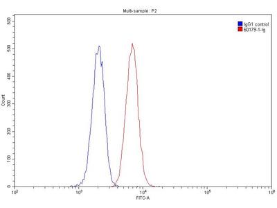 CD109 antibody