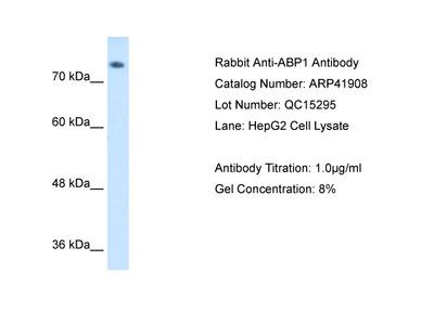 ABP1 Antibody