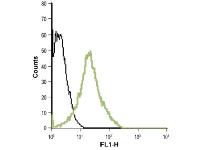 Anti-Human BLT1 (extracellular)-ATTO-488 Antibody