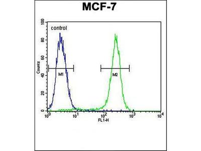 C1QL4 antibody