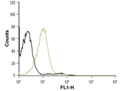 Anti-CXCR4 (extracellular)-ATTO Fluor-488 Antibody