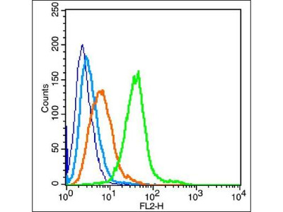 IL18 Receptor alpha antibody
