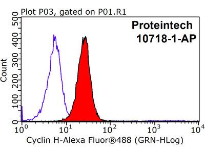 Cyclin H Polyclonal Antibody
