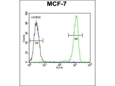 RABGAP1 antibody