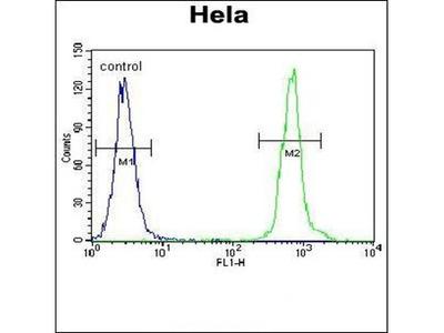 ZNF384 antibody