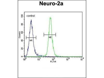 TMEM65 antibody