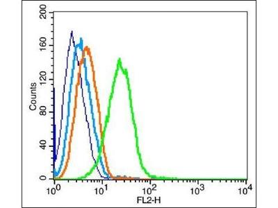 LIR-8 antibody
