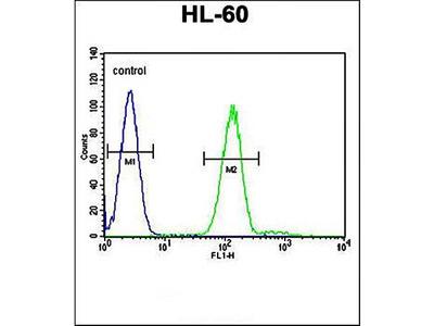 TUBA3C antibody