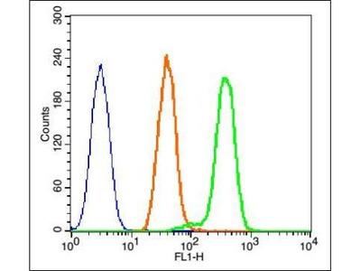 MAPK14 (phospho-Thr180) antibody