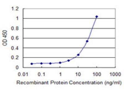 ABCG1 Monoclonal Antibody