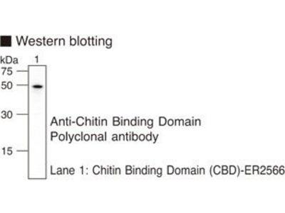 Chitin Binding Domain Polyclonal Antibody : Trial Size