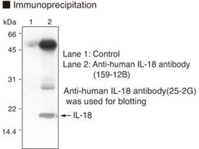 Anti-IL-18 (Human) mAb