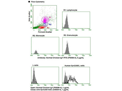 Anti-Podocalyxin (PCLP1) (Human) mAb-FITC
