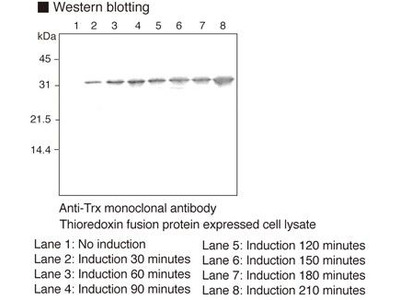 Thioredoxin [2C9] Monoclonal Antibody : Trial Size
