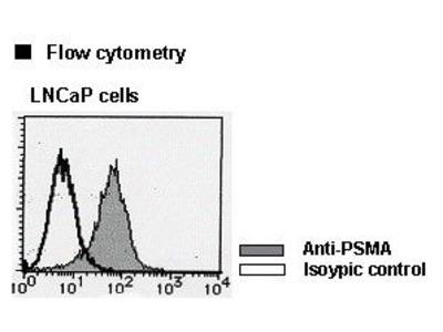 Anti-PSMA (Human) mAb-FITC