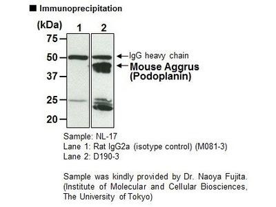 Anti-Aggrus (Podoplanin) (Mouse) mAb