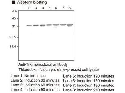 Anti-Thioredoxin (Trx-tag) mAb