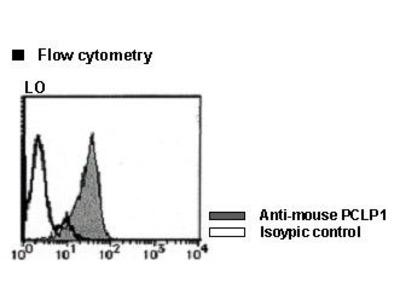 Anti-Podocalyxin (PCLP1) (Mouse) mAb-FITC