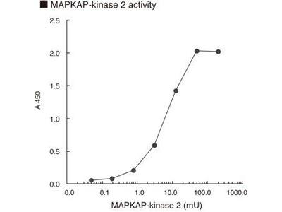 Anti-Phospho-LSP1 (Ser204) mAb