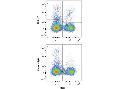 TCR gamma / delta Antibody