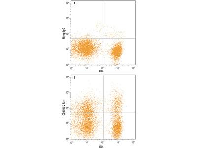 Canine CD25 / IL-2R alpha Antibody