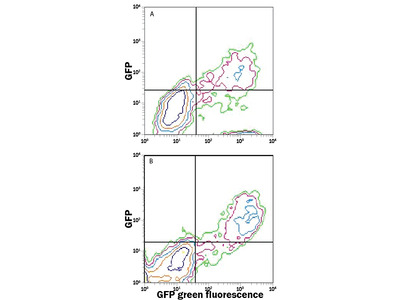 GFP PE-conjugated Antibody