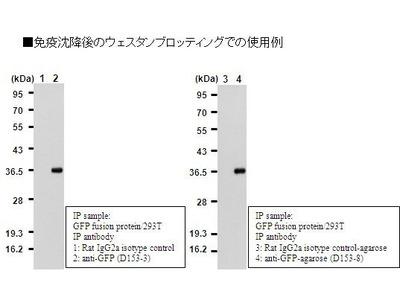 GFP Polyclonal Antibody : Trial Size