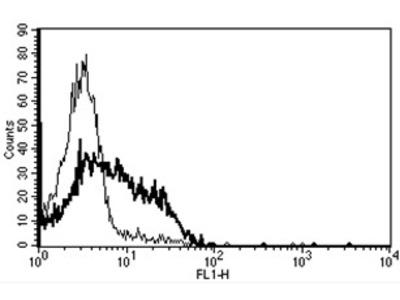 anti CD95 / FAS
