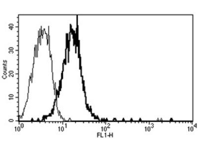 anti CD109 / CPAMD7