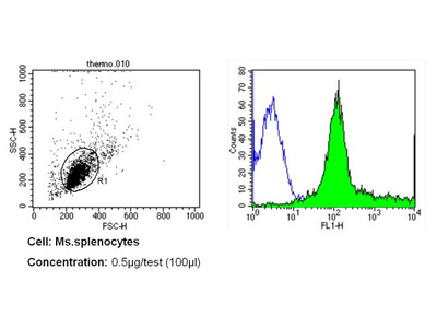 CD31 Monoclonal Antibody (2H8)