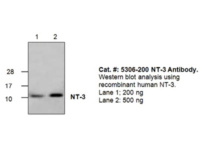 NT-3 Antibody