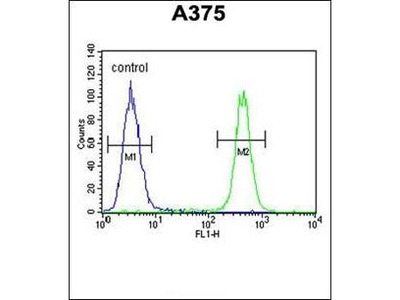C6orf170 antibody