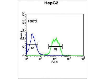 FBXO3 antibody