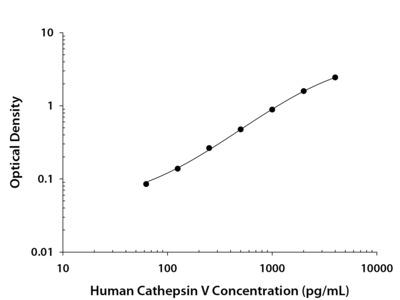 Human Cathepsin V DuoSet ELISA