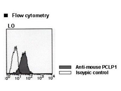 Anti-Podocalyxin (PCLP1) (Mouse) mAb-Biotin