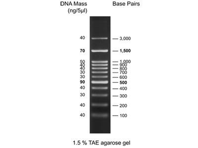 100bp DNA Ladder (L3k)