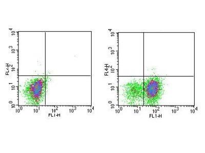 CD11c Antibody (3.9)