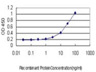 FBXL3 Antibody (3C4)