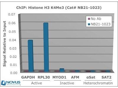GAPDH primer