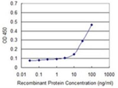 Cyclin G Antibody (1E3)